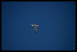 geo_bird