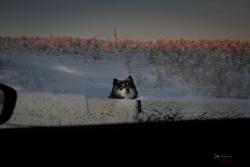 murmansk-89