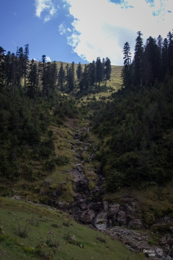 georgia_summer-168