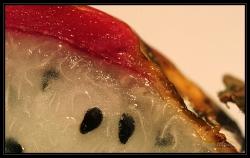 thayfruit
