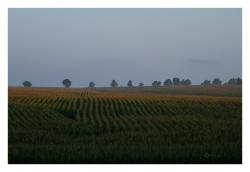 В поле